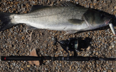 Pesca alla Spigola a Spining – Esche artificiali Topwater
