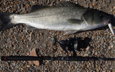 Artificiali per la Spigola – Pesca alla Spigola a Spining