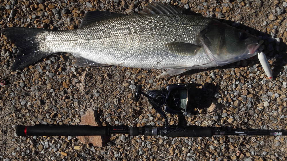 Señuelos lubina – Señuelos para pescar róbalo spinning
