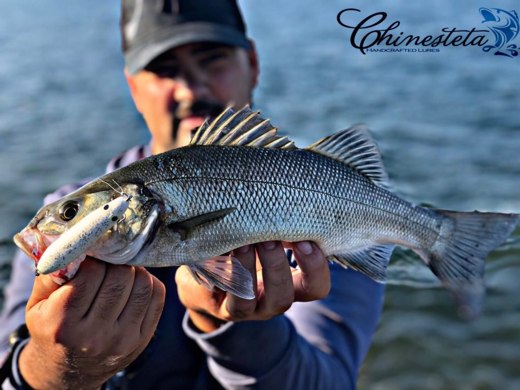 Pesca lubina Llobarro 80