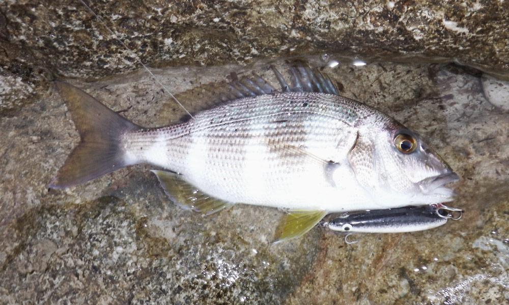 chinesteta-sea-fishing-60-captura-2
