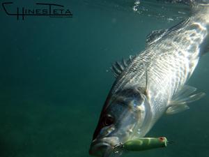 señuelos pesca rockfishing