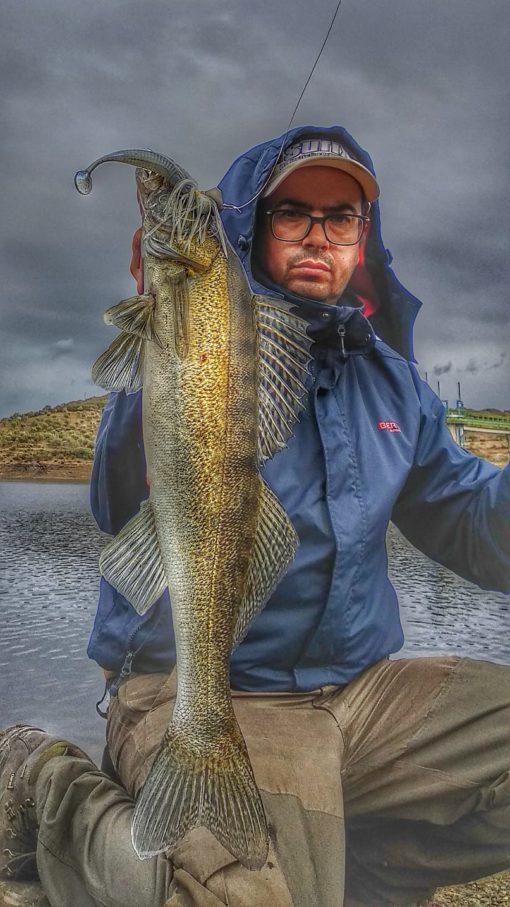 Pesca lucioperca chatterbait