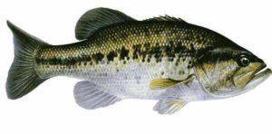 nuestro-amigo-el-bass
