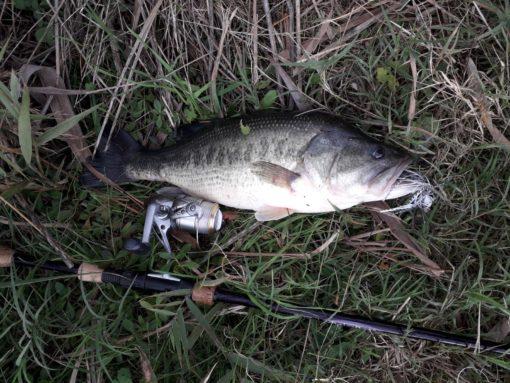 Pesca del bass con chatterbaits