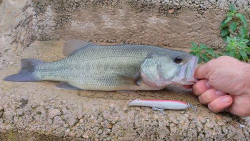 Señuelos pesca bass